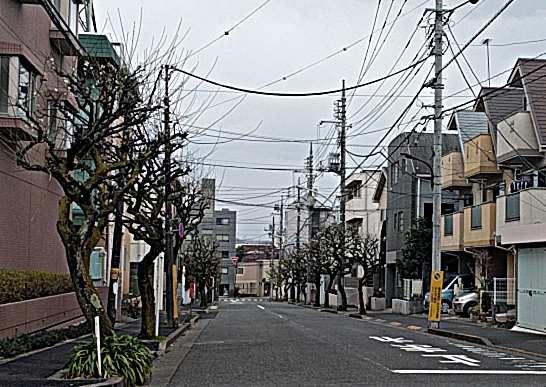 片町の梅通り