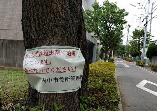 あんずの木の警告板