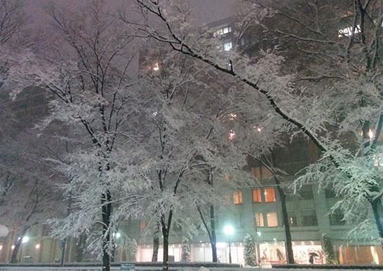 雪の日のけやき