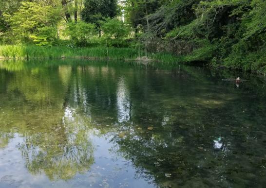西国分寺の姿見の池